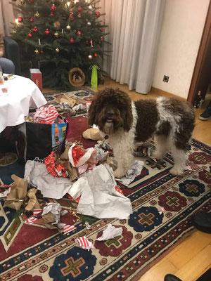 Geschenke auspacken beherrscht Gilbo perfekt