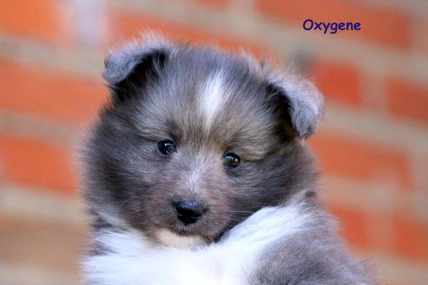 Oxigene  maschio /boy     blue                      prenotato/reserved