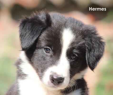 Hermes     maschio/boy             biblack              prenotato/reserved