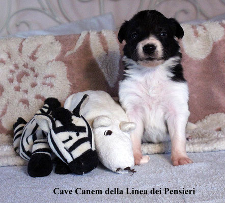 Cave Canem    peso/ weight     950gr.        prenotata/reserved