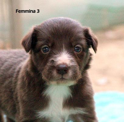 Femmina /girl 3      bianco e marrone/white brown     disponibile/available