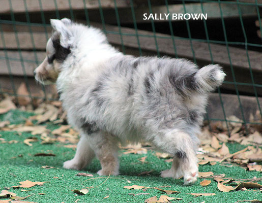 Sally Brown     peso/weight   1,270 kg.         Prenotato/reserved
