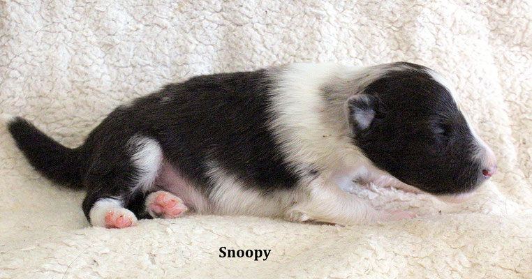 Snoopy        peso/weight      400 gr.          disponibile/available