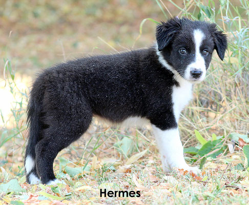 Hermes     peso/weight     3,020  kg.             prenotato/reserved