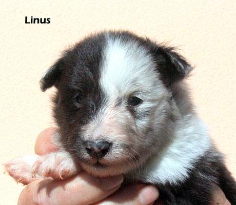 Linus    maschio /boy           biblue       prenotato/reserved