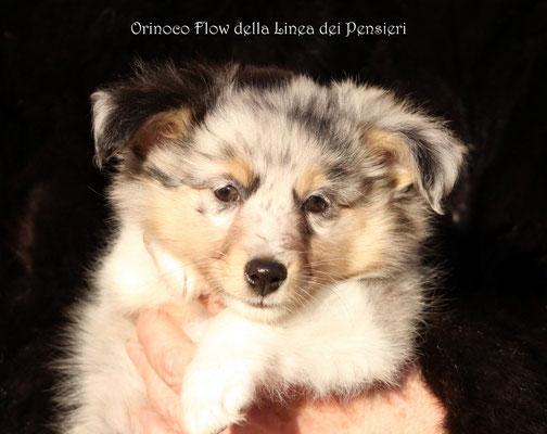 Orinoco Flow     maschio/boy           prenotato/reserved