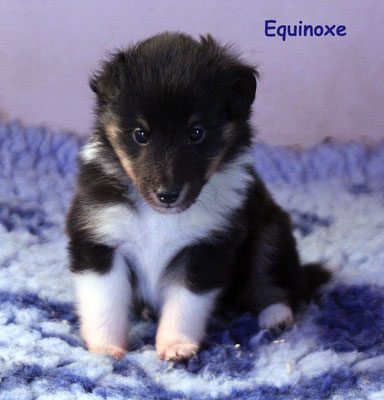 Equinoxe     femmina/girl                tricolor   prenotata/reserved