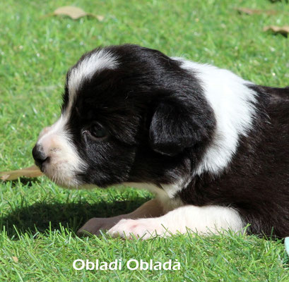 Obladì Obladà    maschio/boy     bianco nero  disponibile/available