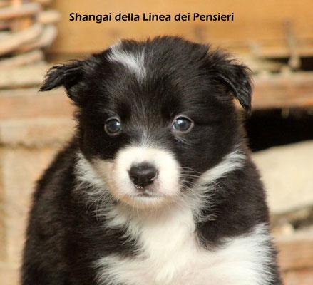 Shangai   femmina/girl       biblack           prenotata/reserved