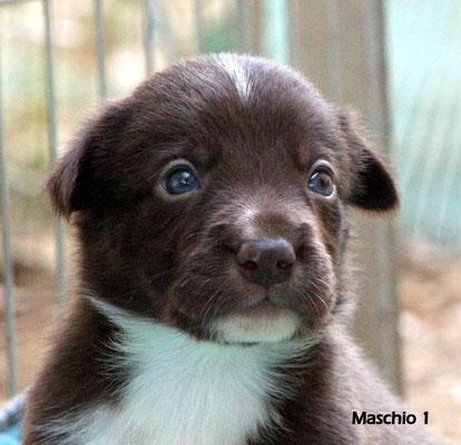 Maschio/boy 1           bianco e marrone/white brown        disponibile/available