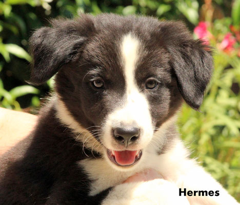 Hermes   maschio/boy      biblack      disponibile/available