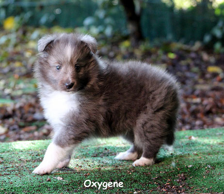 Oxygene      peso/weight   1,080 kg.             prenotato/reserved