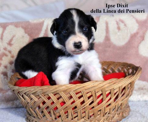 Ipse Dixit    femmina/female      bianca nera/biblack    prenotata/reserved