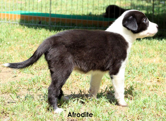 Afrodite   peso/ weight  2,580 kg           prenotata/reserved