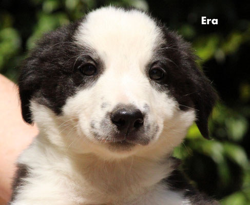 Era   femmina/girl            biblack            prenotata/reserved
