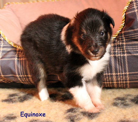 Equinoxe   peso/weight   590  gr.       prenotata/reserved