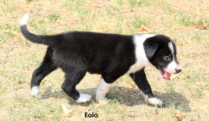 Eolo    peso/weight      2,570 kg.              prenotato/reserved