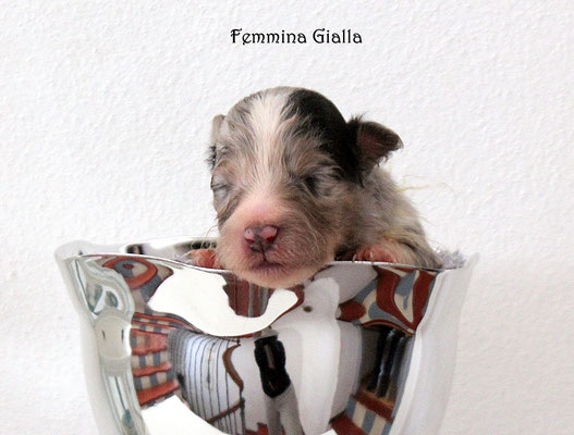 Femmina gialla/girl yellow             prenotata/reserved