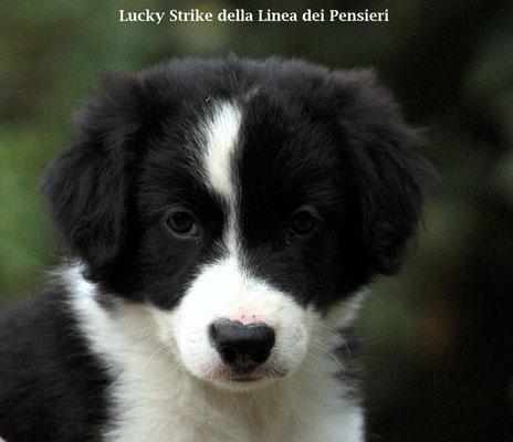 Lucky Strike         maschio/boy   biblack          disponibile/available
