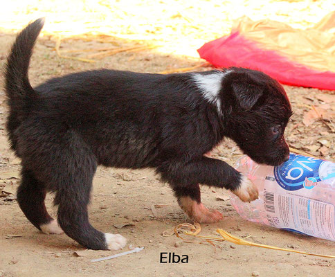 Elba     peso/weight   1,3  kg.           disponibile/available