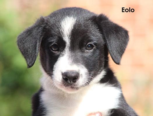 Eolo   maschio/boy     biblack            prenotato/reserved