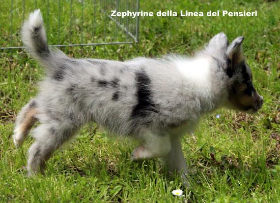 Zephyrine     peso/weight   1,360 kg.