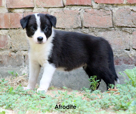 Afrodite   peso/weight    2,110 kg.               prenotata/reserved