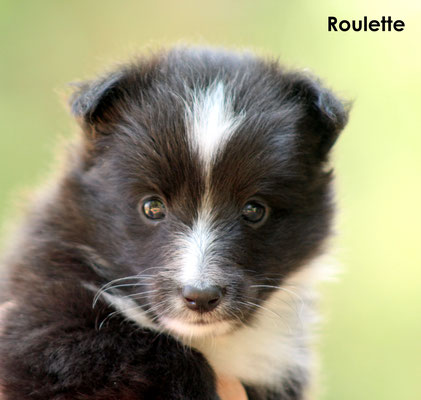 Roulette     femmina/girl     biblack           prenotata/reserved