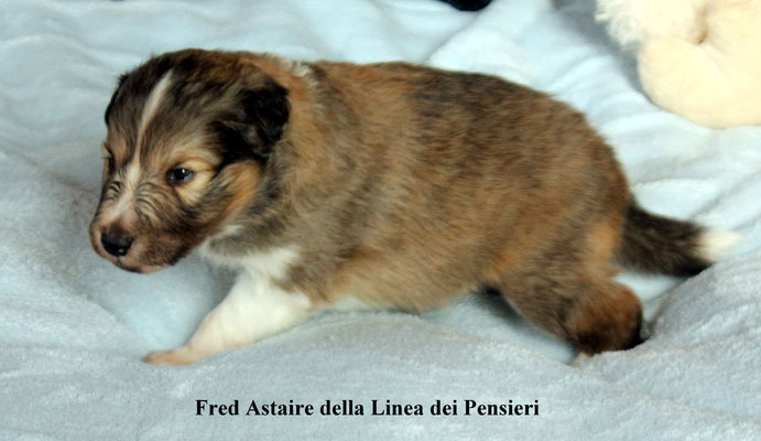 Fred Astaire              peso/weight     770 gr.         prenotato/reserved