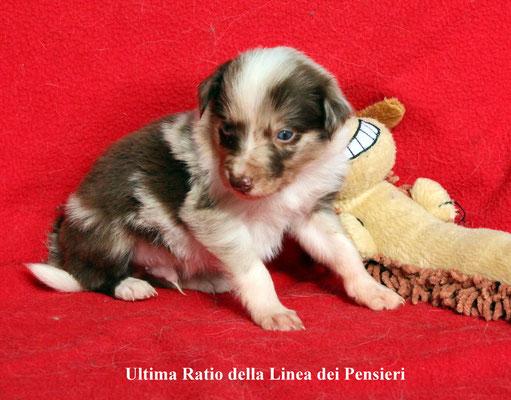 Ultima Ratio      peso/weight     1,110  kg.      prenotato/reserved