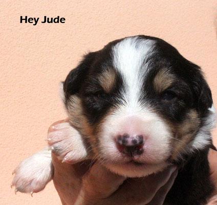 Hey Jude     maschio/boy          tricolore       prenotato/reserved
