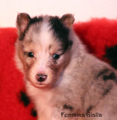 femmina gialla / girl yellow            prenotata/reserved