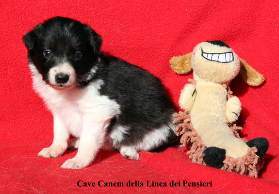 Cave Canem       peso/weight     1,280 kg.          prenotata/reserved