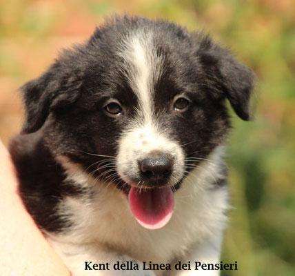 Kent   maschio/boy biblack                disponibile/available