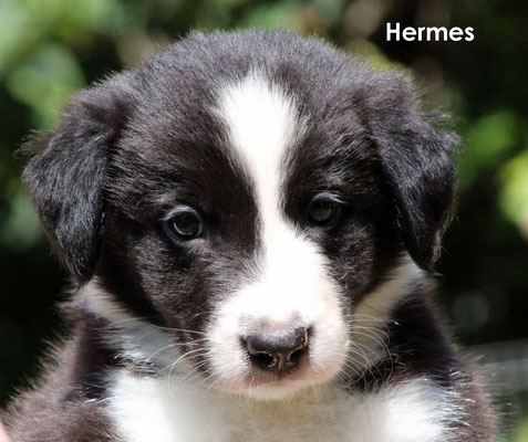 Hermes    maschio/boy          biblack             disponibile /available