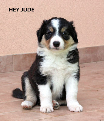 Hey Jude   peso/weight    3,080kg.           Prenotato/reserved