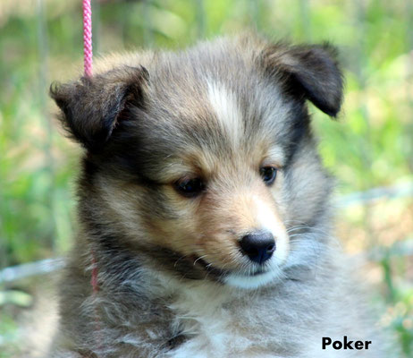 Poker     maschio/boy       fulvo/ sable             prenotato/reserved