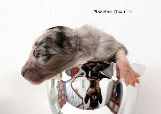 Maschio azzurro/ boy blue           prenotato/reserved