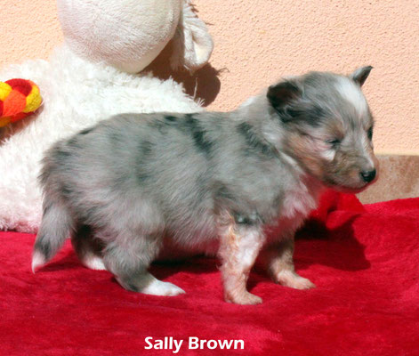 Sally   brown          peso/weight   620 gr.     prenotata/reserved