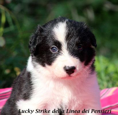 Lucky Strike      maschio biblack/boy                  disponibile/available