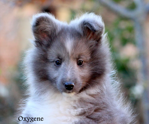 Oxygene  maschio/boy      biblue               prenotato/reserved
