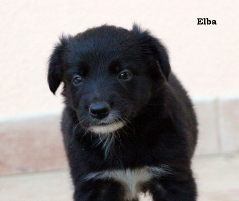 Elba    femmina/girl        biblack       prenotata/reserved