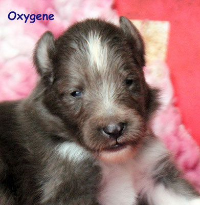 Oxygene      maschio/boy    disponibile/available