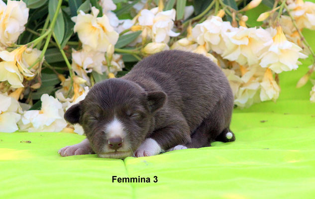 Femmina/girl 3    peso/weight  600 gr.        disponibile/available
