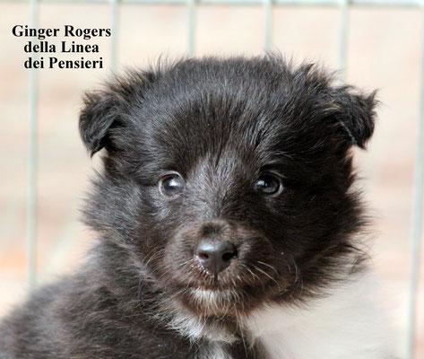 Ginger Rogers   femmina/female     bianca e nera/biblack   prenotata/reserved