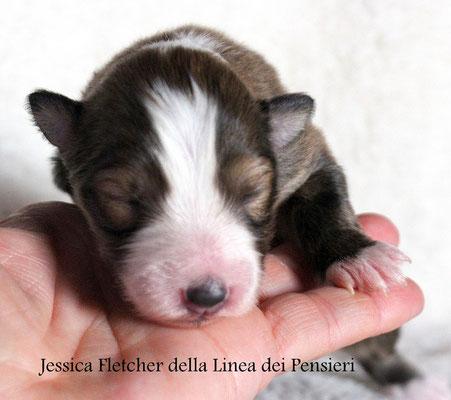 Jessica Fletcher                      femmina fulva             prenotata