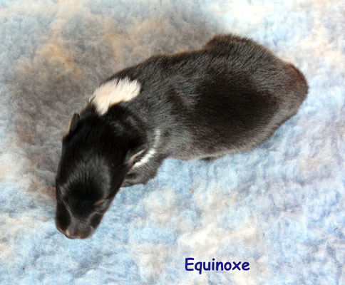 Equinoxe      peso/weight      320 gr.        prenotata/reserved