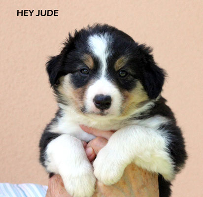 Hey Jude   maschio/ boy         tricolore    Prenotato/reserved