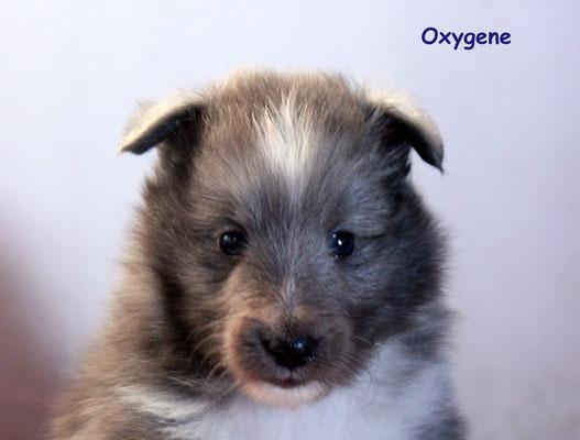 Oxygene   maschio /boy     blue              prenotato/reserved