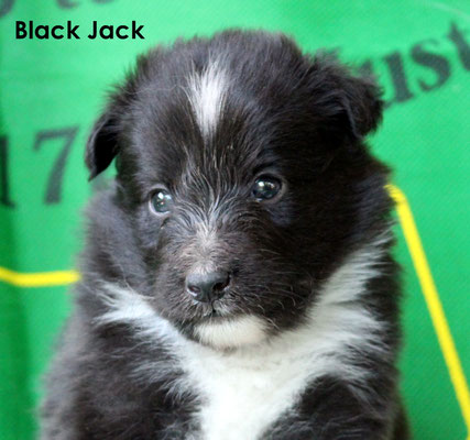 Black Jack   maschio/boy     biblack         prenotato/ reserved